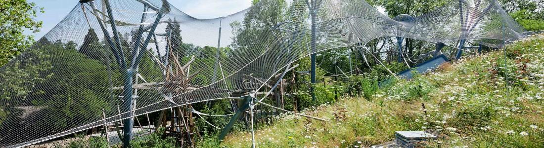 Bonobos haben draußen viel (Spiel-)Platz | Medienservice für Journalisten