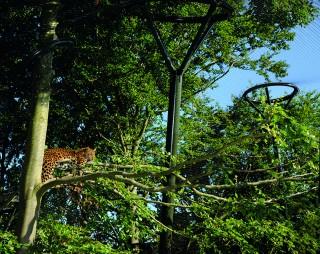 """New Animal Enclosure gives Visitors a """"Safari Feeling"""""""