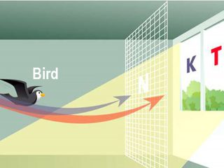 UK: Bird protection for all requirements