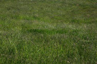 Biomasse auf Ökofläche um 260 Prozent höher